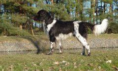 16-0359 Hunter von der Leezener Au